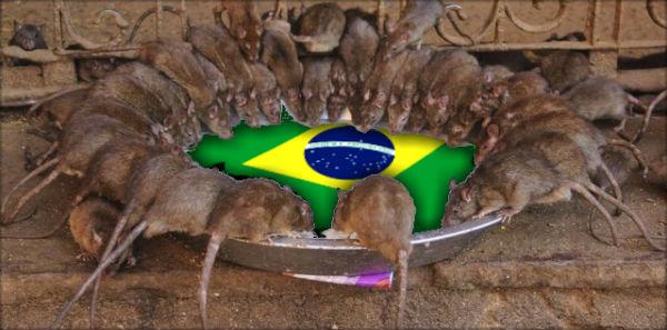 ratos brasil